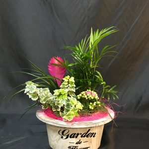 centro plantas mini