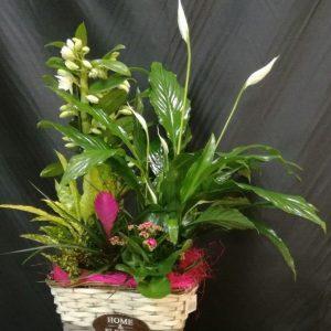cesta 5 plantas