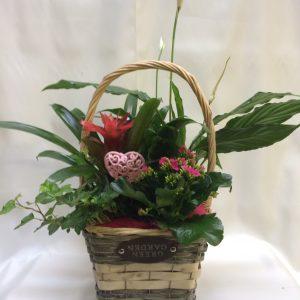cesta planta