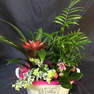 centro mini plantas