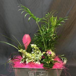 mini centro plantas