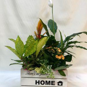 Caja Planta Variada