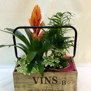 Caja Planta